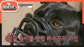 멋지기도 하지만 위험한 달이의 공격성♨ 주인을 지키기 위해선 강자에게도 달려든다! | KBS 210621 방송